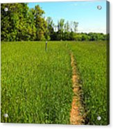 Field Path Acrylic Print