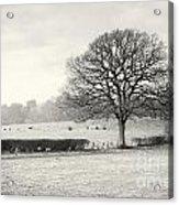 Field Scenery Acrylic Print