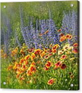 Fields Of Lavender And Orange Blanket Flowers Acrylic Print