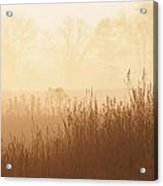Fields Of Tall Grass In The Mist Acrylic Print