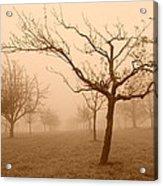 Fields Of Trees Acrylic Print