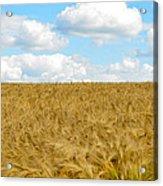 Fields Of Wheat Acrylic Print
