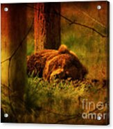Fiercely Tired Acrylic Print