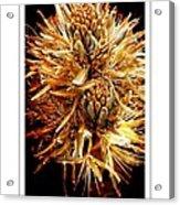 Fiery Floral Acrylic Print