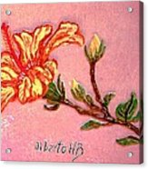 Fiery Hibiscus Acrylic Print