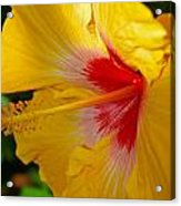 'fifth Dimension' Hibiscus Acrylic Print