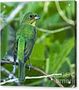 Fifty Shades Of Green Acrylic Print
