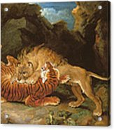 Fight Between A Lion And A Tiger, 1797 Acrylic Print by James Ward