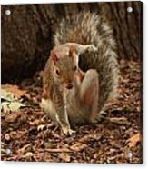 Fighter Squirrel Acrylic Print