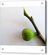 Figs Collage Acrylic Print