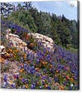 Figueroa Mountain Splendor Acrylic Print