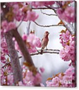 Finch Frame Acrylic Print