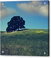 Find It In The Simple Things Acrylic Print by Laurie Search