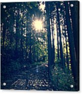 Find Yourself Go Run No. 6 - Forest With Sun Flare Acrylic Print