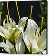 Finishing Blossoming - Featured 3 Acrylic Print
