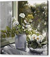 Fiori Bianchi Alla Finestra Acrylic Print
