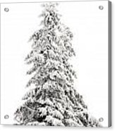 Fir Tree In Winter Acrylic Print
