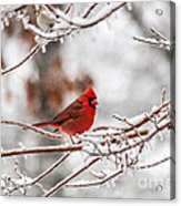 Fire And Ice Acrylic Print by Jinx Farmer