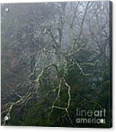 Fire Cherry In Mist Acrylic Print