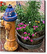 Fire Hydrant With Flowers Acrylic Print