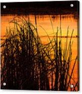 Fire On The Marsh Acrylic Print