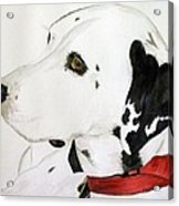 Firedog Acrylic Print