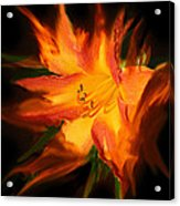 Firelily Acrylic Print
