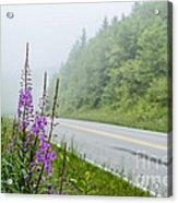 Fireweed And Fog Scenic Highway Acrylic Print