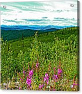 Fireweed And Mountains From Top Of The World Highway-yukon Acrylic Print