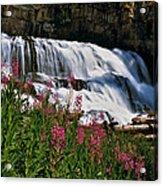Fireweed Blooms Along The Banks Of Granite Creek Wyoming Acrylic Print