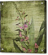 Fireweed - Featured In 'comfortable Art' Group Acrylic Print