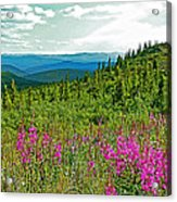Fireweed Near Top Of The World Highway-alaska Acrylic Print