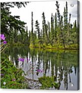 Fireweed On The Clearwater Acrylic Print