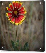 Firewheel Acrylic Print