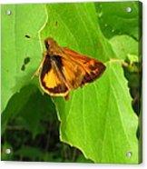 Firey Skipper Butterfly Acrylic Print