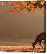 First Autumn Acrylic Print