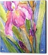 First Bloom Acrylic Print