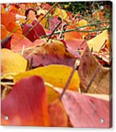 First Day Of Fall Acrylic Print
