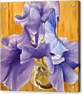 First Iris Of The Season Acrylic Print