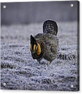 First Light 4 Acrylic Print by Thomas Young
