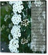 First Peter One Six To Seven White Floral  Acrylic Print