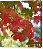 First Signs Of Fall  Acrylic Print