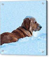 First Snow Bliss Acrylic Print