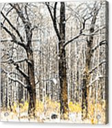First Snow. Tree Brothers Acrylic Print