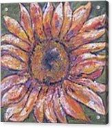 First Sunflower  Acrylic Print
