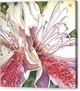 First Thoughts Of Spring Acrylic Print