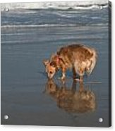 First Time At The Ocean Acrylic Print
