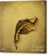 First To Fall Acrylic Print