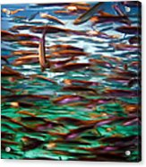 Fish 1 Acrylic Print by Dawn Eshelman