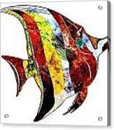 Fish 505-11-13 Marucii Acrylic Print